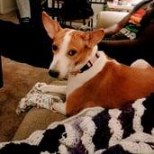 CHRIS'S DOG: NALA