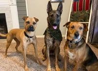 Kaylees dogs Dakota, Maverick, and Ranger