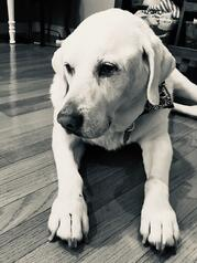 Leslie's Dog:Sally