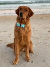 Melissas Dog Denver